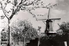 molen-65